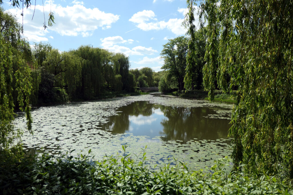 Seerosen im Teich. Foto: Ulrich Horb